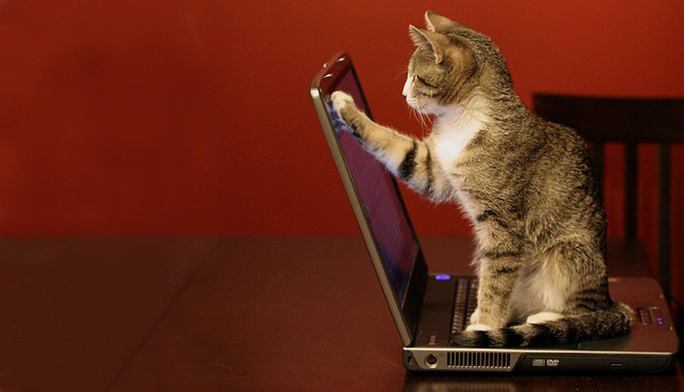 لنوو سهام فوجیتسو راخرید بهترین لپ تاپ